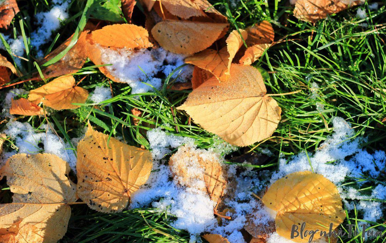 Bốn mùa ở Thụy Điển